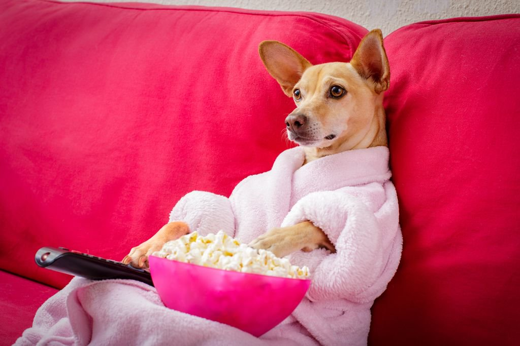 dog-friendly-cinema