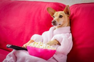Perfect Millennial Leisure: Take Your Pup to a Dog-Friendly Movie Theater